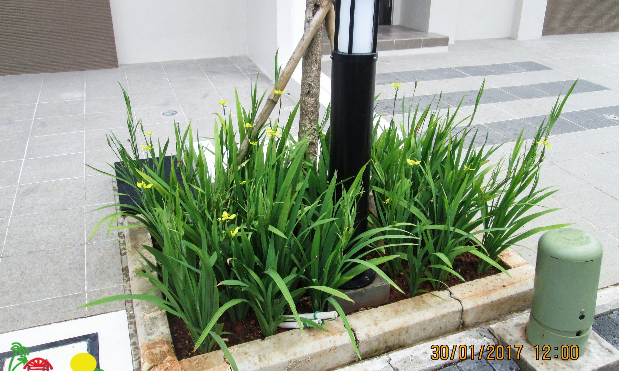 January 30 2020 Kampung Flora Cipta