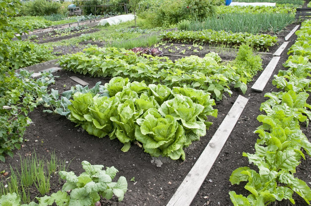 zone-5-veggies
