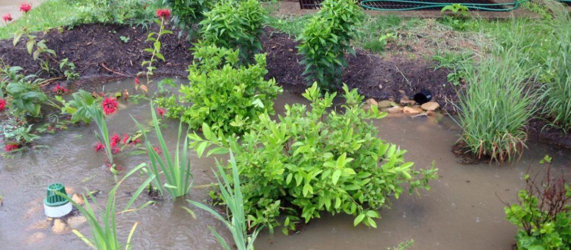 3RWW Rain Garden July 10 2013a