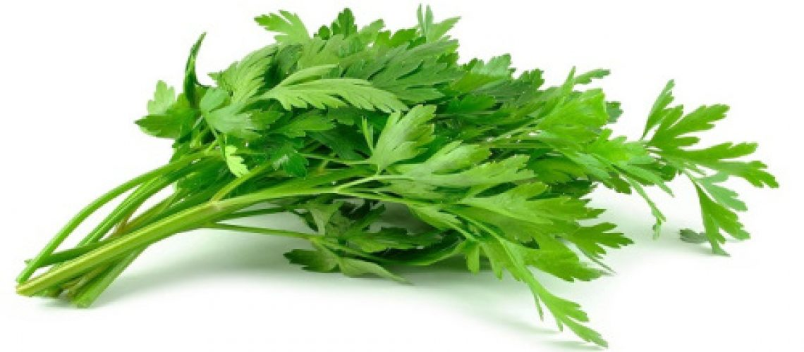 cara-menanam-daun-seledri